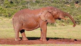 Divertimento da lama do elefante africano vídeos de arquivo