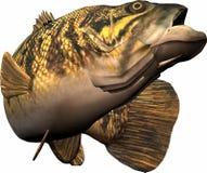 Divertimento da pesca Imagem de Stock Royalty Free