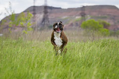 Divertimento del cane Fotografia Stock