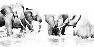 Divertimento dell'elefante Fotografia Stock