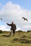 Divertimento di caccia col falcone di volo Immagine Stock Libera da Diritti