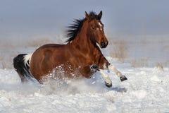 Divertimento di funzionamento del cavallo in neve immagine stock libera da diritti