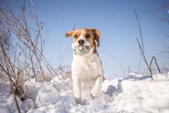 Divertimento di inverno con il cane Immagine Stock