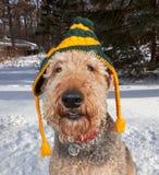 Divertimento do chapéu do cão Imagem de Stock Royalty Free