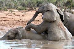 Divertimento do elefante africano Fotografia de Stock Royalty Free