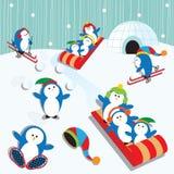 Divertimento do pinguim Fotografia de Stock
