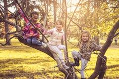 Divertimento na árvore Miúdos na natureza imagens de stock royalty free