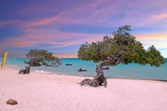 Divi-divi Bäume auf Eagle setzen bei Aruba bei Sonnenuntergang auf den Strand Stockbild