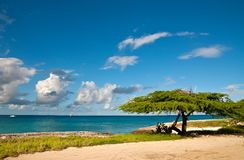 Divi-Divi Tree of Aruba. Sky. Ocean. Tropics. Royalty Free Stock Images