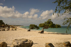 Divi Divi trees. On the beach in Aruba Royalty Free Stock Photography