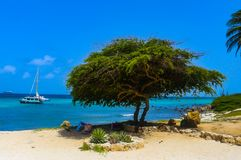 A Divi Tree and Boat at Arashi Beach Aruba Beach Hut and Cactus Plant blue sky terquois ocean. Arashi is a settlement and beach on the northwestern tip of Aruba Stock Photo