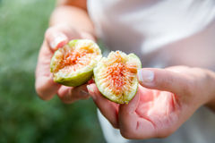 Divided fresh organic figs from the tree Royalty Free Stock Photography