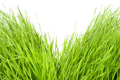 Divided grass Royalty Free Stock Image