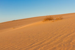 Divided photography on two part by sand and sky. Lands and panorama background. Sustainable ecosystem. Yellow dunes at. Sunrise royalty free stock photography