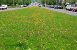 Dividindo o gramado Fotos de Stock
