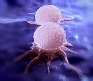 Dividing breast cancer cell Royalty Free Stock Photo