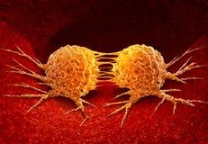 Dividing Cancer Cell Royalty Free Stock Photos
