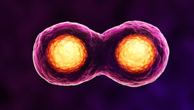 Dividing cells Stock Photo