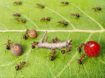 Ants cargo traffic in anthill, teamwork Royalty Free Stock Photography