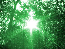 Divine Forest. A conceptual image of a heavenly light in forest Royalty Free Stock Images