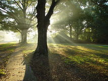 Divine Light. Morning sun shinning through the trees Stock Photos