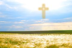 Divine light from the sky. The way to God through forgiveness. Heaven on earth. A feather grass in the field is lighted from the sky. The Resurrection and stock photos