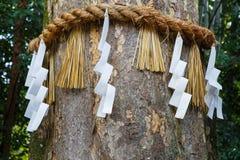Divine Tree at Ujikami-jinja Shrine in Kyoto Royalty Free Stock Photography