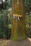 Divine Tree A yorishiro in Shinto terminology is an object capa Stock Image