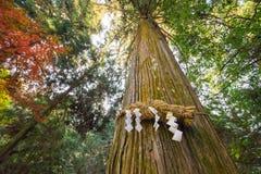 Divine Tree A yorishiro in Shinto terminology is an object capa Stock Photo