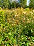 Divinely piękni dandelions zdjęcie stock