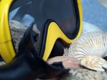 Diving. Gear and sea shells Stock Photos