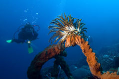 Diving Stock Photos