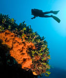 Diving Stock Photography