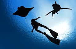 Diving. Royalty Free Stock Photography