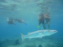Diving with barracudas Stock Photos