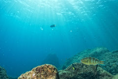 Diving in colorful reef underwater Stock Image