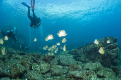 Diving in colorful reef underwater Royalty Free Stock Image