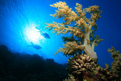 Diving on coral reef Stock Photography