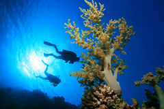 Diving on coral reef Stock Photo