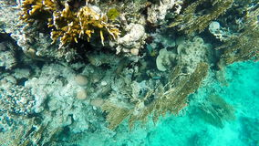 Diving the Coral reef stock footage