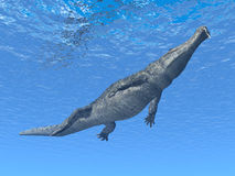 Diving Crocodile Royalty Free Stock Photo