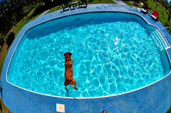 Diving Dog Stock Photo