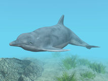 Diving Dolphin Stock Images