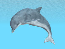 Diving Dolphin Stock Image