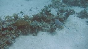 Diving Egypt red sea divers.  stock video footage