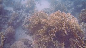 Diving Egypt red sea fish and corals.  stock footage
