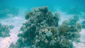 Diving Egypt red sea fish and corals.  stock video