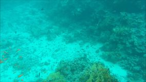Diving in Egypt. Diving in Sea. Video shot on the GoPro camera stock video