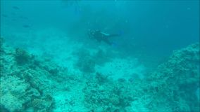 Diving in Egypt. Diving in Sea. Video shot on the GoPro camera stock video footage