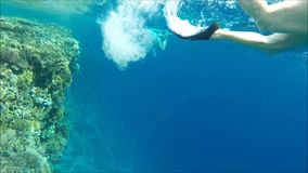 Diving in Egypt. stock footage